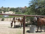 Amerind Horses