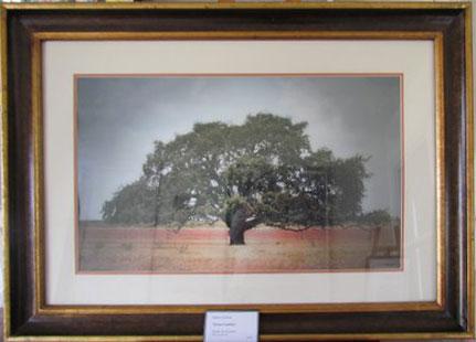 Robert Codina landscape