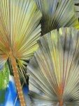 """Palms"" Zoom Detail"
