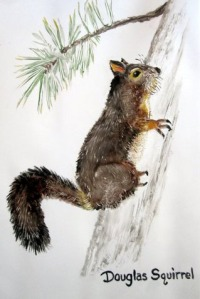 Douglas Squirrel Tile by Mary P Williams
