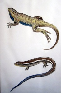 American Fence Lizard and Skink Tile by Mary P Williams