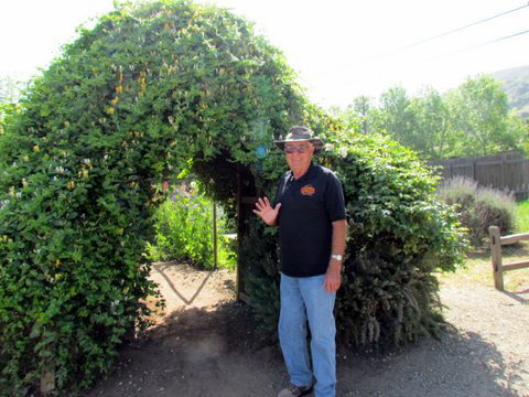 Honeysuckle Arch is the entrance to the Sweet Pea Maze