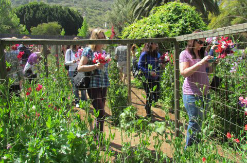 In the Sweet Pea Maze
