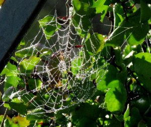 Estero Llano Web