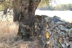 Stone Fence built by Chinese laborers