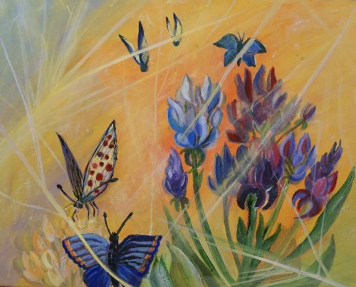 Butterflies and Lupines